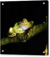 Frog Night Feeding Acrylic Print