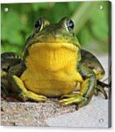 Frog On Flat Stone B  9871 Acrylic Print