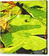 Frog On Lily Pad Acrylic Print