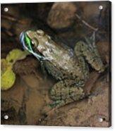 Frog Pond Acrylic Print