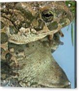 Frog Reflection Acrylic Print
