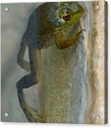 Frog Swim Acrylic Print
