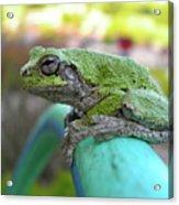 Frog Watering Plants Acrylic Print