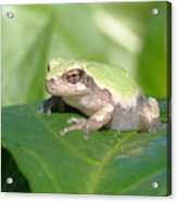 Froggie In The Pepper Patch Acrylic Print