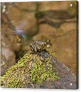 Froggy On A Hill Acrylic Print