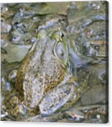 Frogs Eye View Acrylic Print