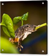 Frogs Life Acrylic Print
