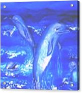 Frolicking Dolphins Acrylic Print