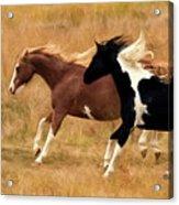 Frolicking Horses Acrylic Print