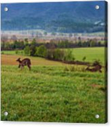 Frolicking On A Spring Morning Acrylic Print