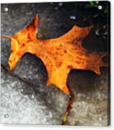 From Last Fall Acrylic Print
