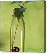 From Little Acorns Acrylic Print