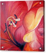 From The Heart Of A Flower Red Acrylic Print