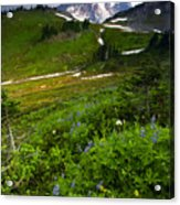 From The Top Acrylic Print by Mike  Dawson