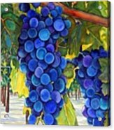 From The Vineyard Acrylic Print