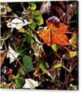 Front Gardens Acrylic Print