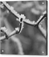 Frost 6 Acrylic Print
