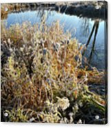 Frost Along Nippersink Creek In Glacial Park At Sunrise Acrylic Print