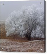 Frost And Fog Acrylic Print