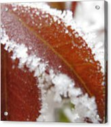 Frost And Leaf Acrylic Print