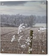 Frost-covered Rural Field Cumbria Acrylic Print by John Short