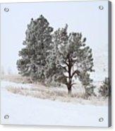 Frost . Fog And Twenty Below ... Montana Art Photo Acrylic Print