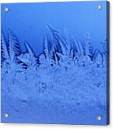 Frost Forest Acrylic Print by Thomas R Fletcher