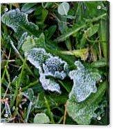 Frost Acrylic Print