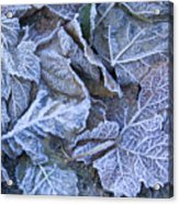 Frost Acrylic Print