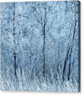 Frosted Beauty Acrylic Print