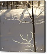 Frosted Branches Acrylic Print