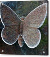 Frosted Butterfly Acrylic Print