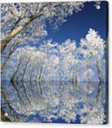 Frosted Dreams Acrylic Print