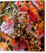 Frosted Fall Acrylic Print