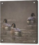 Frosted Geese Acrylic Print
