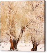 Frosted Golden Trees Acrylic Print