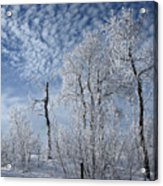 Frosted Hilltop Quakies Acrylic Print