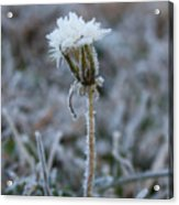 Frosted Acrylic Print