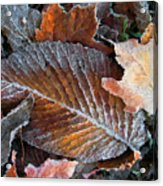 Frosted Painted Leaves Acrylic Print