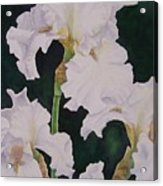 Frosted Pearl Iris Acrylic Print