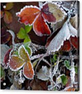 Frosted Strawberries Acrylic Print