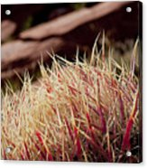 Frosted Tips Acrylic Print
