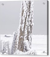 Frosted Tree Root Acrylic Print