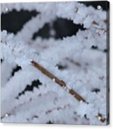 Frosted Twigs Acrylic Print