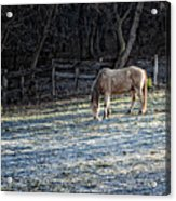 Frosty Autumn Morning Acrylic Print