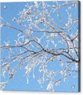 Frosty Branch Acrylic Print