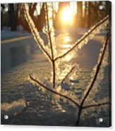Frosty Branches At Sunrise Acrylic Print