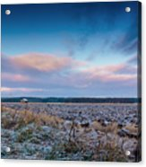 Frosty Fields Acrylic Print