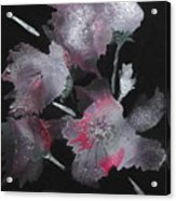 Frosty Flowers Acrylic Print