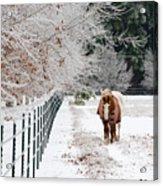 Frosty Mare Acrylic Print